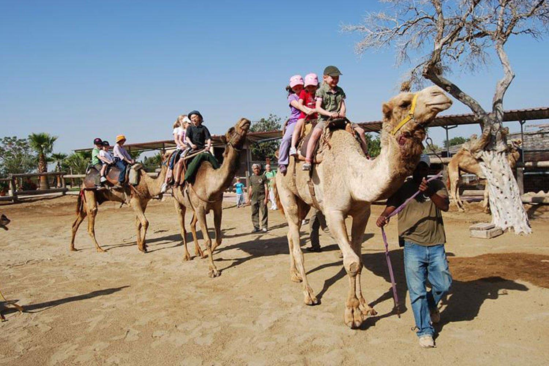 camel riding cyprus ayia napa protaras limassol nicosia pahos luxcy services
