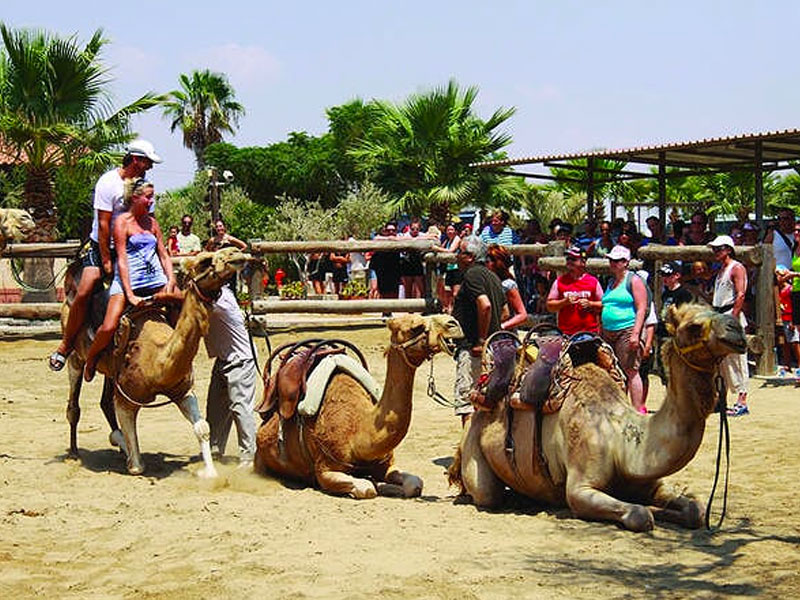 camel park larnaca cyprus bus trip excursion luxcy services